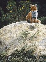 Fox Pup At Den Entrance Fine Art Print