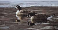 A Break In The Ice- Canada Geese Fine Art Print