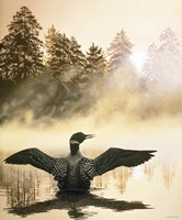 Misty Dawn - Loon Fine Art Print