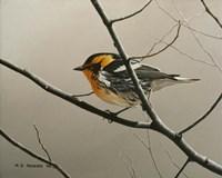 Nashville Warbler Fine Art Print