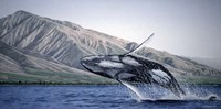Breeching Humpbacks - Maui Fine Art Print