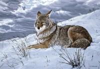 Darkening Sky- Coyote Fine Art Print
