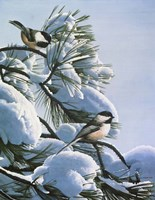 Snow On The Pine - Chickadees Fine Art Print