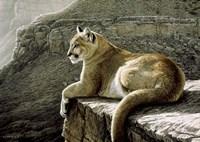 Rimrock - Cougar Fine Art Print