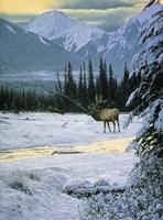 Yellow Dawn - American Elk Fine Art Print