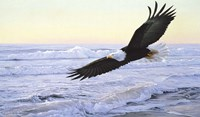 Ocean Dawn- Eagle Fine Art Print