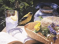 Goldfinch On Straw Hat Fine Art Print