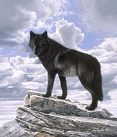Black Wolf On Skyline Fine Art Print