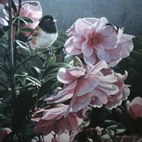 Junco And Camelia Fine Art Print