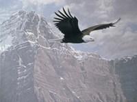 Mountain Flight Fine Art Print