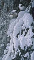 Chickadees In Snow Fine Art Print