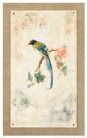 Blue Magpie Fine Art Print
