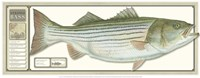 World Record Striped Bass Framed Print