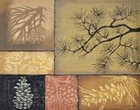Pine Cones 1 Fine Art Print