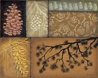 Pine Cones 2 Fine Art Print