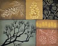 Pine Cones 3 Fine Art Print