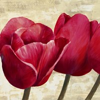 Red Tulips (Detail) Fine Art Print
