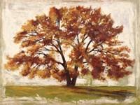 Mattino Fine Art Print