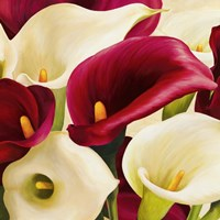 Calla Composition (Detail) Fine Art Print
