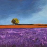 Field of Lavender (Detail) Fine Art Print