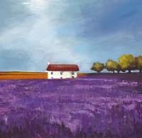 Field of Lavender I Fine Art Print