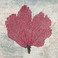 Fan Coral Fine Art Print