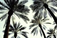 Palm One Fine Art Print