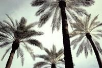 Palm Two Fine Art Print