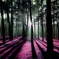 Technicolor Trees I Fine Art Print
