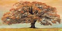 Oak Fine Art Print