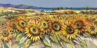 Campo di Girasoli Fine Art Print