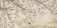 Ciliegio in Fiore Fine Art Print