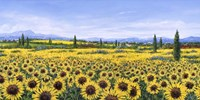 Girasoli Fine Art Print