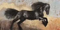 Black Stallion Fine Art Print