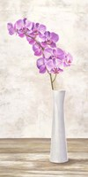 Orchid Arrangement Fine Art Print
