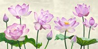 Lotus Flowers Fine Art Print
