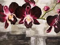 Velvet Orchids Fine Art Print