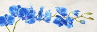 Blue Orchid Fine Art Print