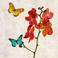 Orchids & Butterflies II Framed Print