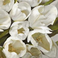 Bianco II Fine Art Print