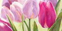 Tulipes I Fine Art Print