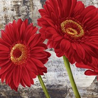 Red Gerberas I Fine Art Print