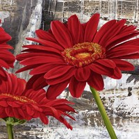 Red Gerberas II Fine Art Print