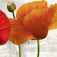 Summer Poppies II Fine Art Print