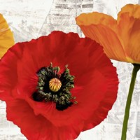 Summer Poppies III Fine Art Print
