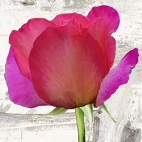 Spring Roses II Fine Art Print