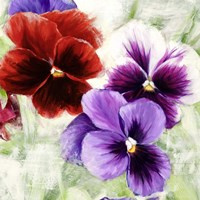 Pansies I Fine Art Print