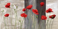 Country Poppies Fine Art Print