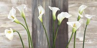 Country Callas Fine Art Print