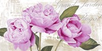 Grand Jardin Royal Fine Art Print